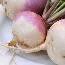 nabo-purple-top-milan-semillas-ecologicas