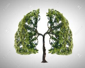 pulmones árbol