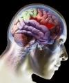Las células madre neurales podrían regenerar elcerebro